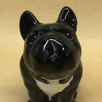 france-buldog-black (7)